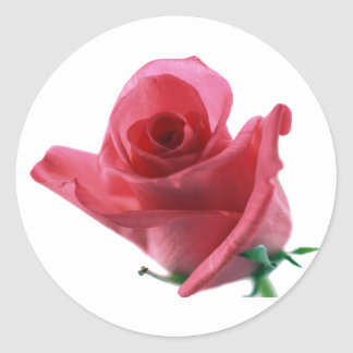 A rose grows sticker