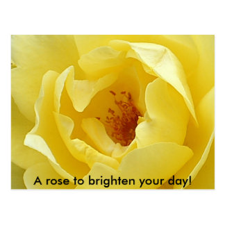 A rose to brighten your day! postcard