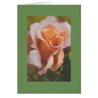 A rose under the rain card