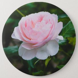 A roses garden 6 inch round button
