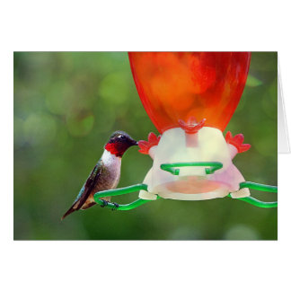 A Ruby Throated Hummingbird Card