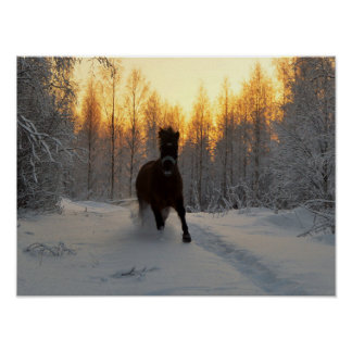 A Running Horse at winter in Finland Poster