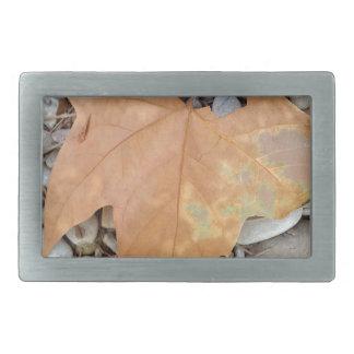 a rusty leaf on pebbles belt buckle