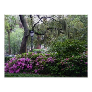 A Savannah Square in Bloom Poster