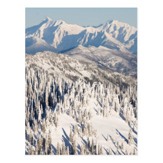 A Scenic View of Snowy Mountains and Trees. Postcard