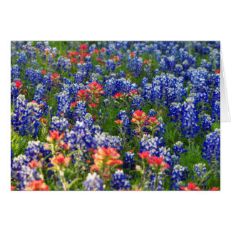 A Sea of Bluebonnets and Indian Paintbrushes Card