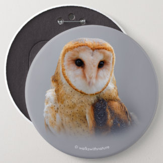A Serene and Beautiful Barn Owl 6 Inch Round Button