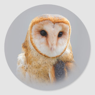 A Serene and Beautiful Barn Owl Classic Round Sticker