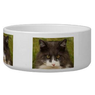 A Serious Look Dog Bowl