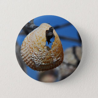 A Shell at the Shore 2 Inch Round Button