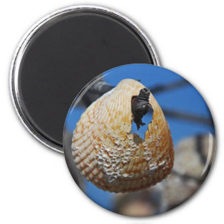 A Shell at the Shore Magnet