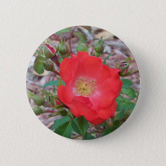A simple salmon colored open rose 2 inch round button