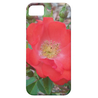 A simple salmon colored open rose case for the iPhone 5