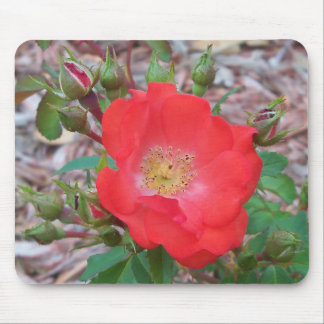 A simple salmon colored open rose mouse pad
