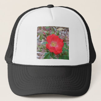 A simple salmon colored open rose trucker hat