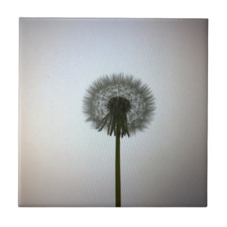 A Single Dandelion Against a White Backdrop Ceramic Tiles