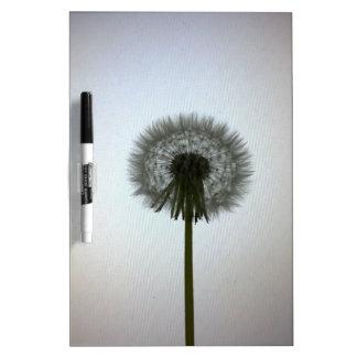 A Single Dandelion Against a White Backdrop Dry Erase Board