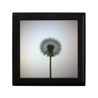 A Single Dandelion Against a White Backdrop Gift Box