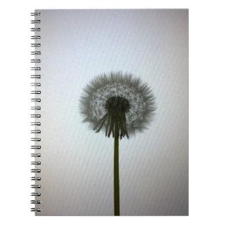 A Single Dandelion Against a White Backdrop Notebook