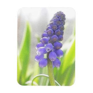 A Single Grape Hyacinth Bloom Rectangular Photo Magnet