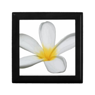 A Single Plumeria Flower Isolated Gift Box
