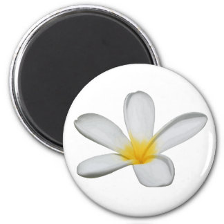 A Single Plumeria Flower Isolated Magnet