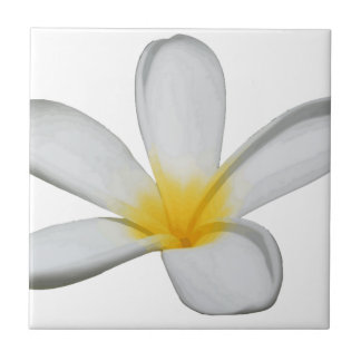 A Single Plumeria Flower Isolated Tiles