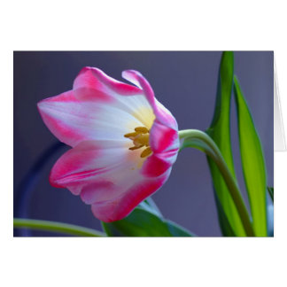 A single tulip card