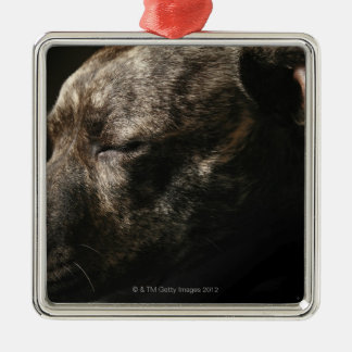 A sleeping pit bull dog Silver-Colored square ornament