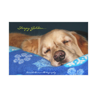 A Sleepy Golden Retriever Canvas Print