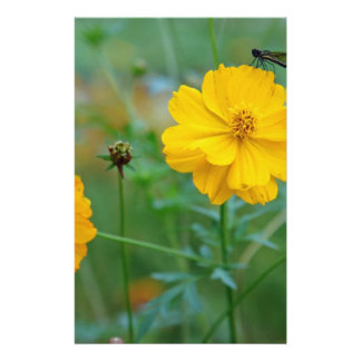 A small dragon fly sitting on a yellow flower custom stationery