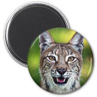 A Smiling Siberian Lynx Magnet
