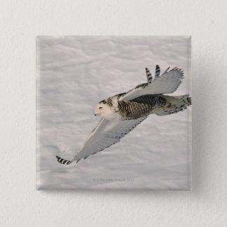 A Snowy owl gliding. 2 Inch Square Button