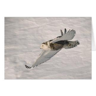 A Snowy owl gliding. Card