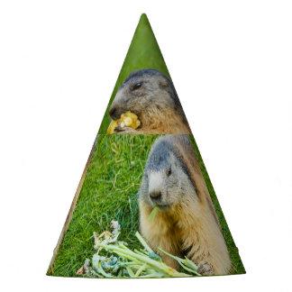 a sociable marmot on Party Hat