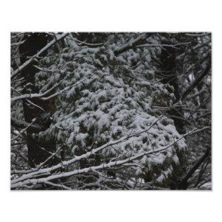 A Somber Scene Of Winter Photo Art
