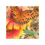 A Spectacular Butterfly on my Gaillardia Pulchella