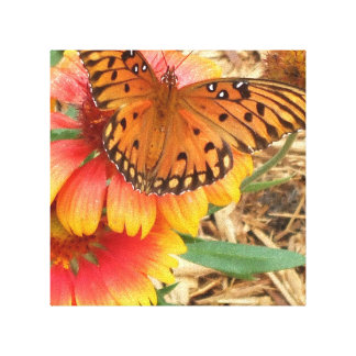 A Spectacular Butterfly on my Gaillardia Pulchella Canvas Print