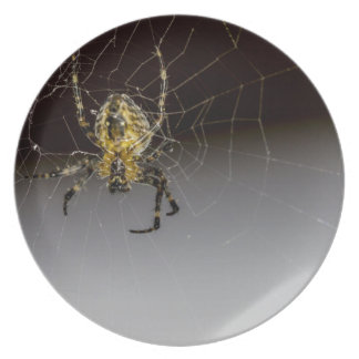 A Spider And His Web Up Close Dinner Plate
