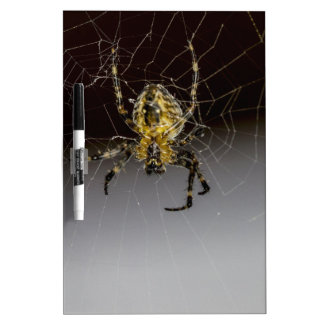A Spider And His Web Up Close Dry Erase White Board