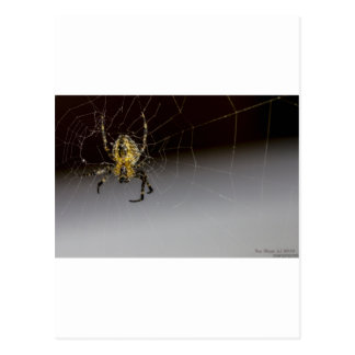 A Spider And His Web Up Close Postcard