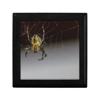 A Spider And His Web Up Close Trinket Box