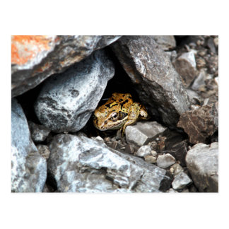 A spotted Frog hides among the rocks in a yard Postcard