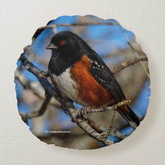 A Spotted Towhee in a Tree Round Pillow