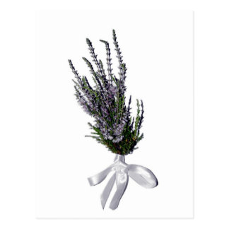 A Sprig of Heather from Scotland Postcard