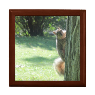 A Squirrel at the Park Gift Box