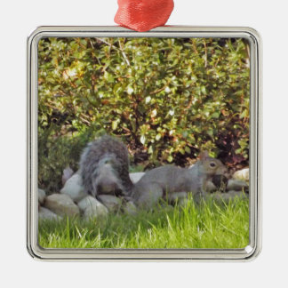 A Squirrel With A Nut In It's Mouth Silver-Colored Square Ornament