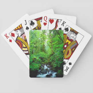 A stream in an old-growth forest playing cards