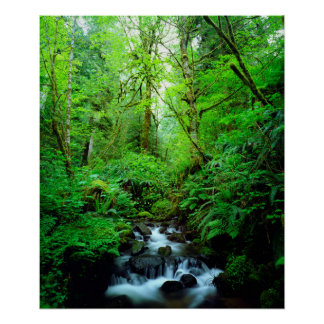 A stream in an old-growth forest poster
