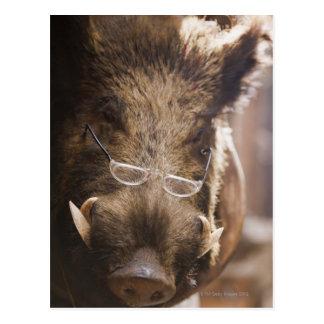 a stuffed wild boar wearing glasses outside a postcard